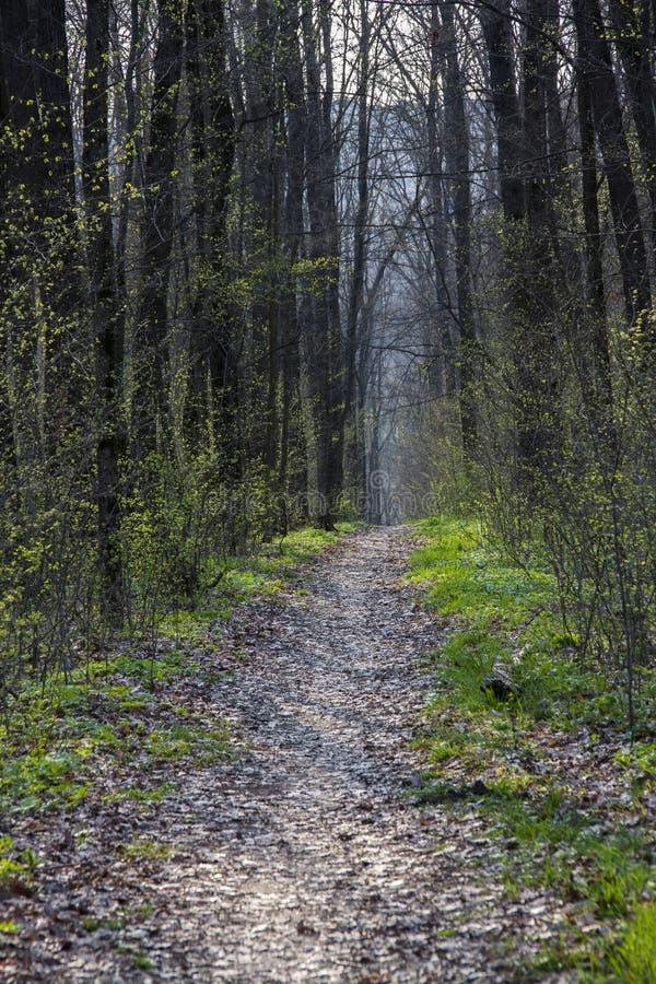 Camino forestal de la primavera en el bosque imagen de archivo