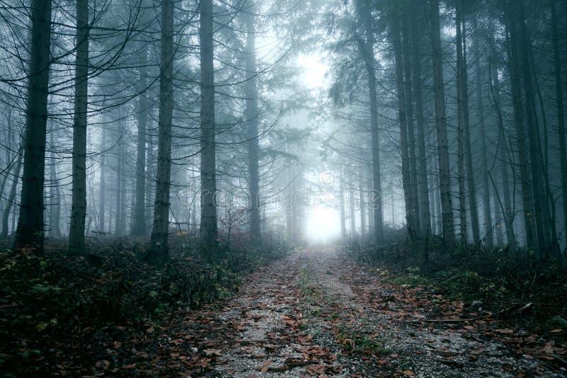 Camino forestal de niebla asustadizo oscuro imágenes de archivo libres de regalías