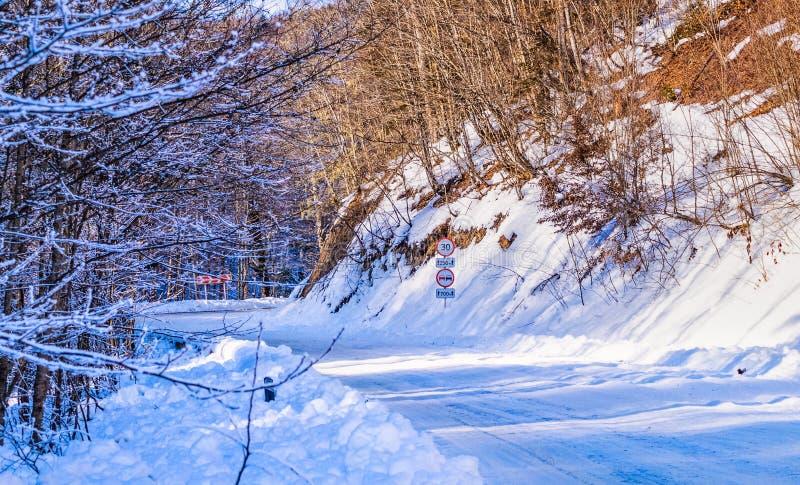 Camino forestal del invierno debajo de la nieve foto de archivo