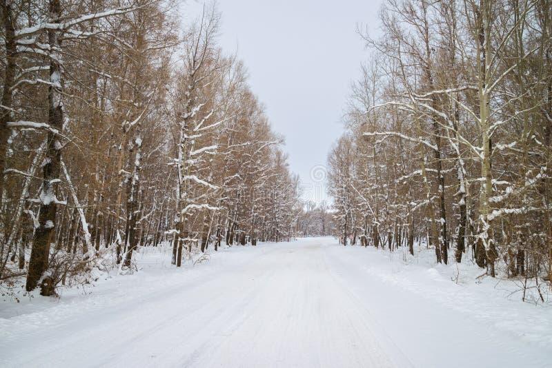 Camino forestal del invierno entre árboles nevados imagen de archivo libre de regalías