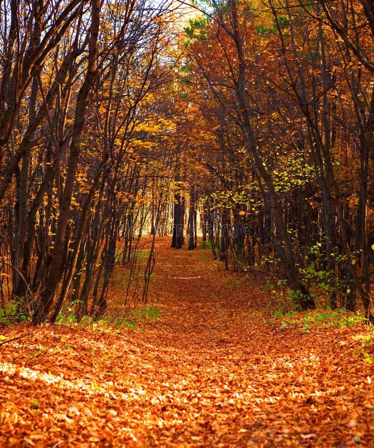 Camino forestal del otoño fotos de archivo libres de regalías