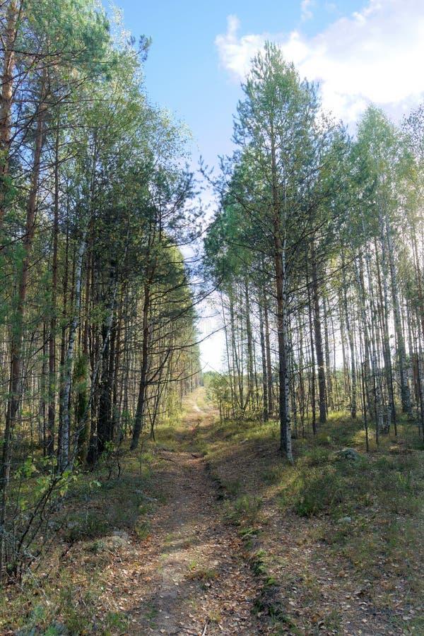 Camino forestal en oto?o temprano Soporte de la pared de los ?rboles a la izquierda e a la derecha del camino foto de archivo libre de regalías