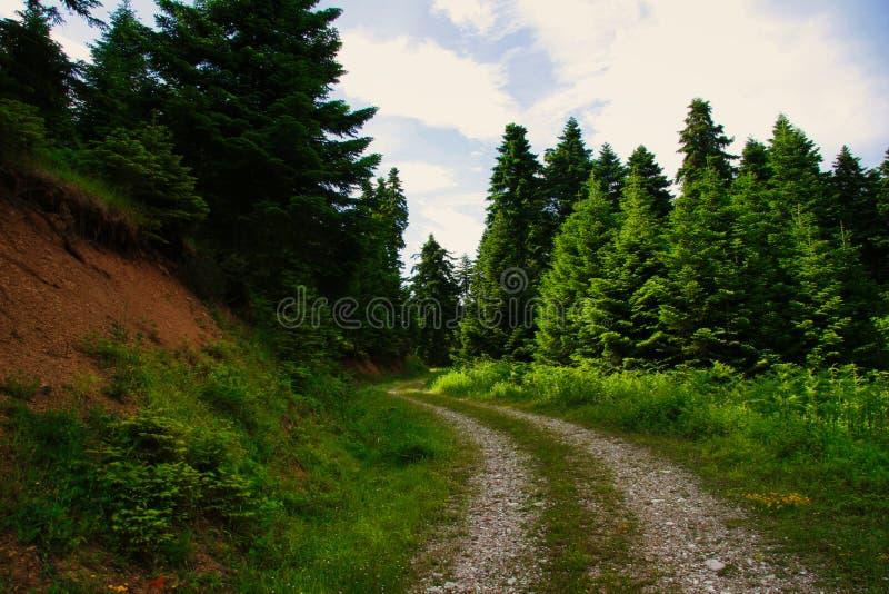 Camino forestal en Pertouli, Trikala, Thessaly, Grecia foto de archivo