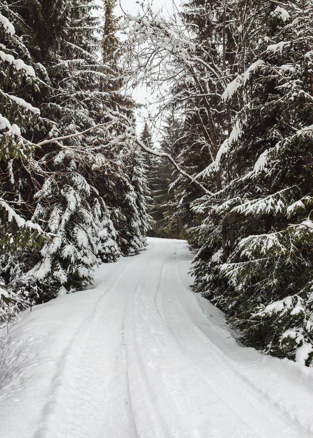 Camino forestal estrecho del invierno cubierto con nieve con los árboles imagenes de archivo