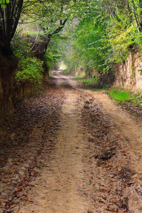 Camino forestal fangoso en otoño en barranco fotografía de archivo libre de regalías