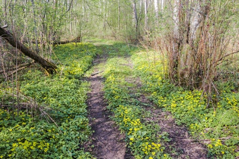Camino forestal hermoso en flores amarillas fotografía de archivo