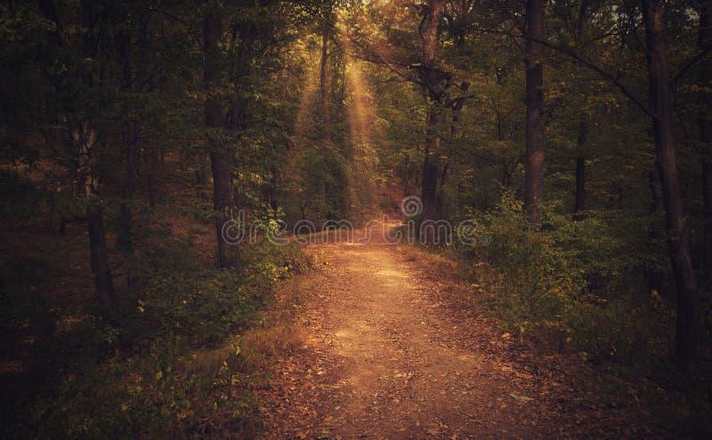 Camino forestal místico bajo rayos de sol de la puesta del sol imagenes de archivo
