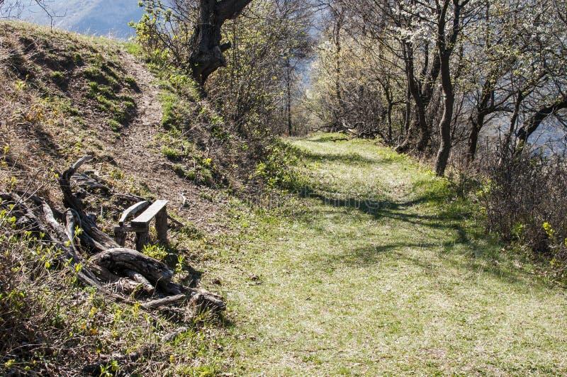 Camino forestal pintoresco fotografía de archivo