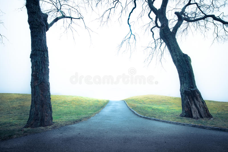 Camino frío con los árboles imagen de archivo