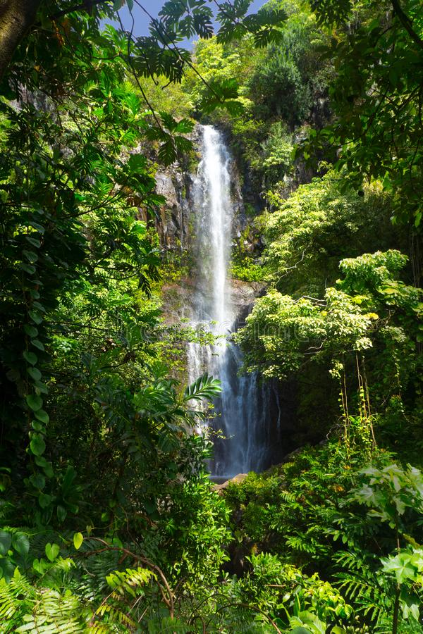 Camino a Hana Waterfall Tropics Jungle fotografía de archivo libre de regalías