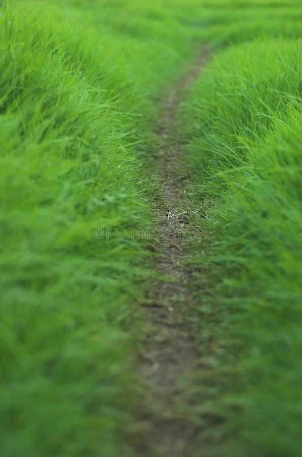 Camino herboso imagen de archivo