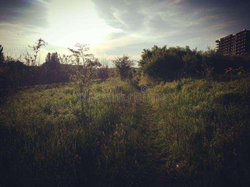 Camino herboso del sol fotos de archivo