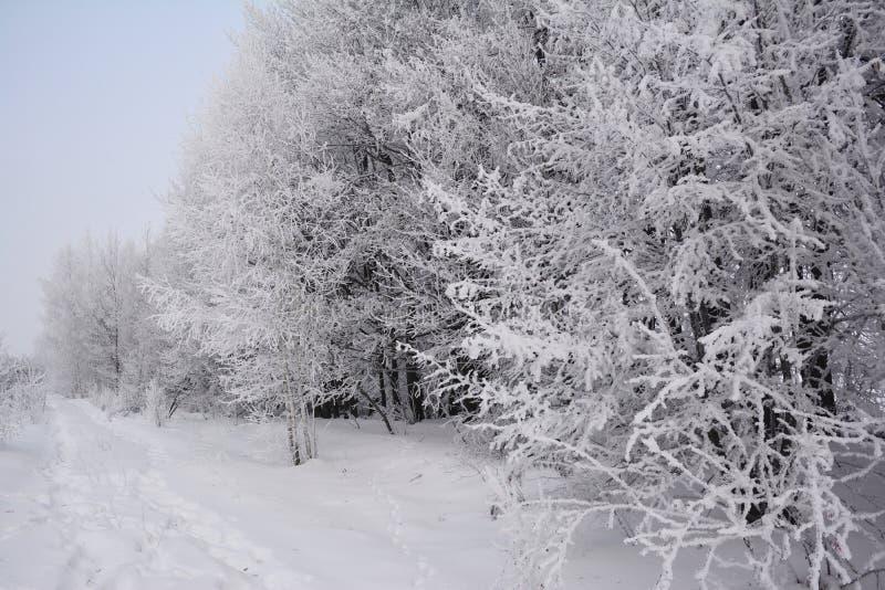 Camino hermoso del invierno con los árboles forestales cubiertos de la nieve y de la escarcha fotos de archivo