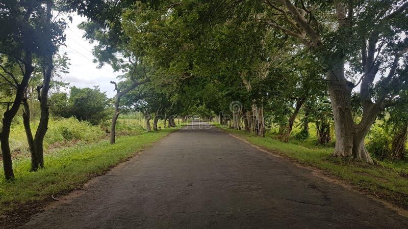 Camino hermoso en lanaka del sri foto de archivo libre de regalías