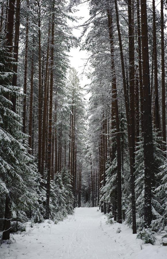 Camino hivernal fotos de archivo