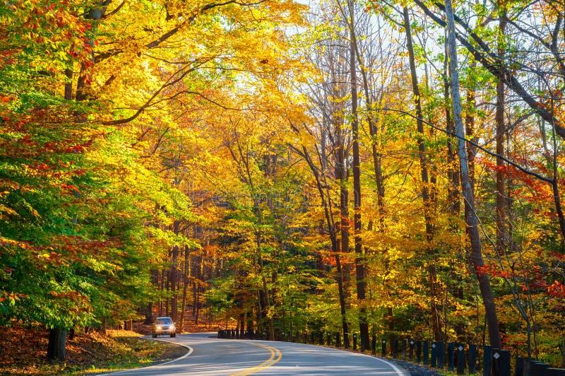 Camino iluminado por el sol del otoño fotografía de archivo libre de regalías