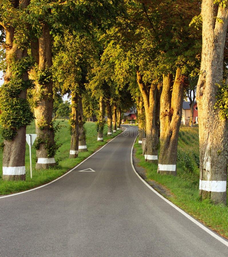 Camino lateral del país imagen de archivo libre de regalías