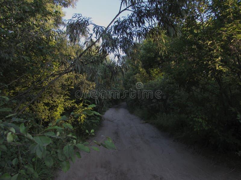Camino ligero gris rodeado por los árboles verdes del verano, arbustos e hierba, iluminados por los rayos del sol de oro de levan fotografía de archivo libre de regalías