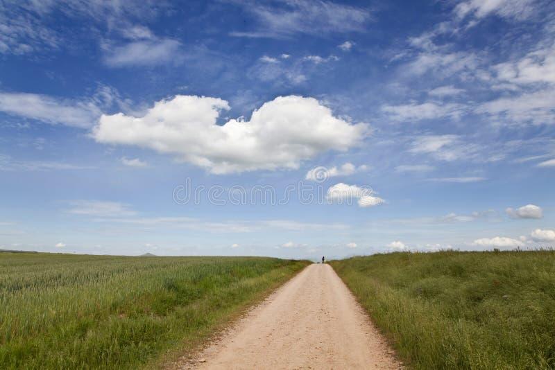 Camino a lo largo de los campos de trigo fotografía de archivo libre de regalías