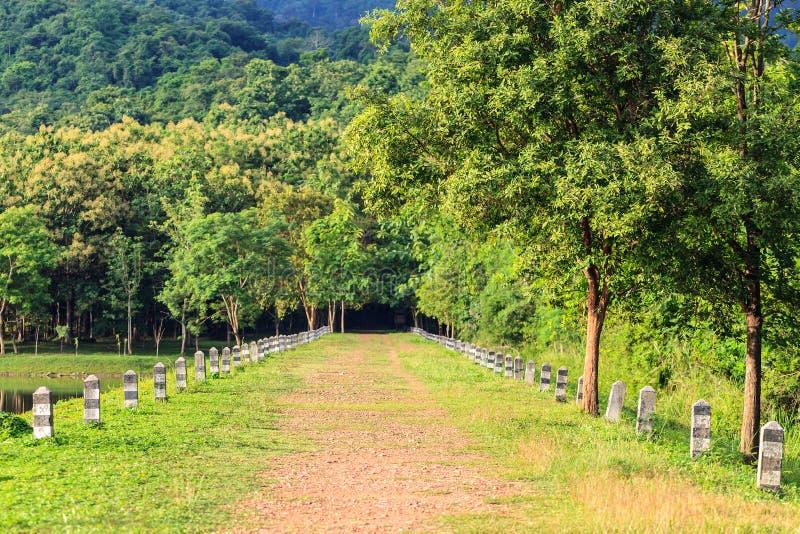 Camino local a la selva imagen de archivo