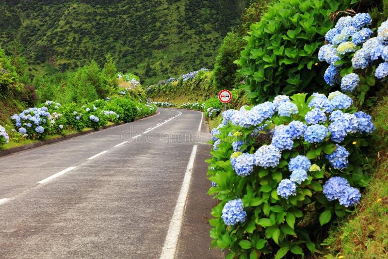 Camino maravilloso en el sao Miguel Island fotografía de archivo