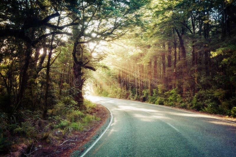 Camino a Milford Sound imagen de archivo libre de regalías