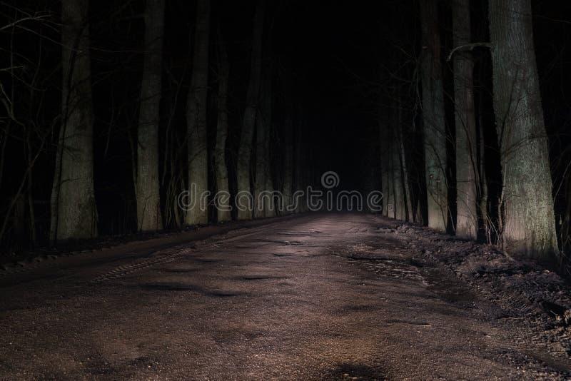 Camino misterioso terrible a través del bosque en la noche fotografía de archivo