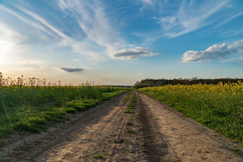Camino molido en el campo de florecimiento de la rabina, campo hermoso, puesta del sol imagen de archivo libre de regalías