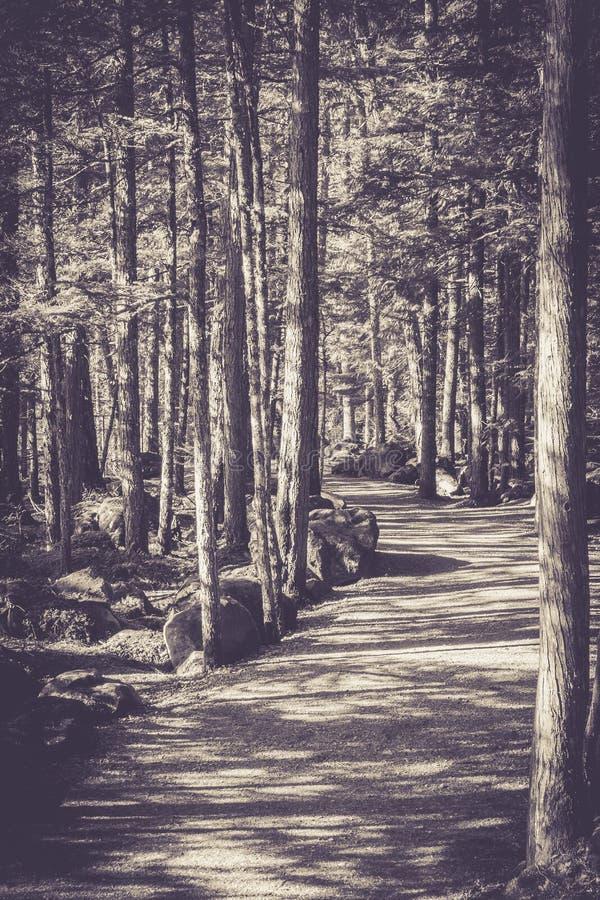 Camino monocromático y árboles imagen de archivo