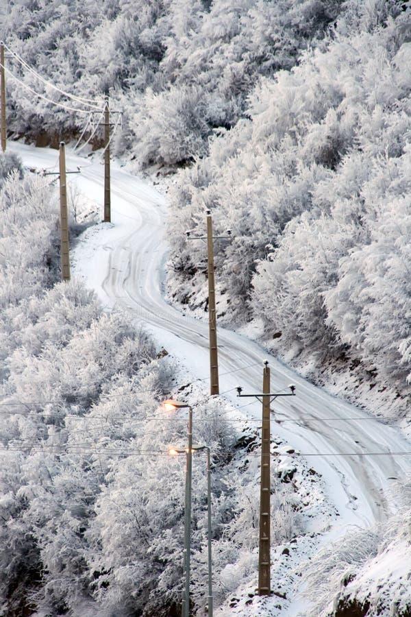 Camino nevado en bosque hivernal foto de archivo libre de regalías