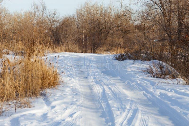 Camino nevado en el bosque imágenes de archivo libres de regalías
