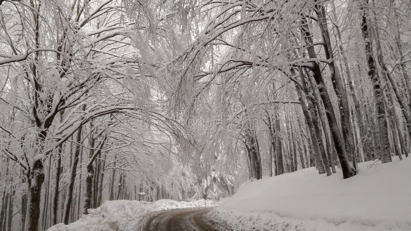 Camino nevado vacío para montar Amiata en Toscana Paisaje típico del invierno en Italia foto de archivo libre de regalías