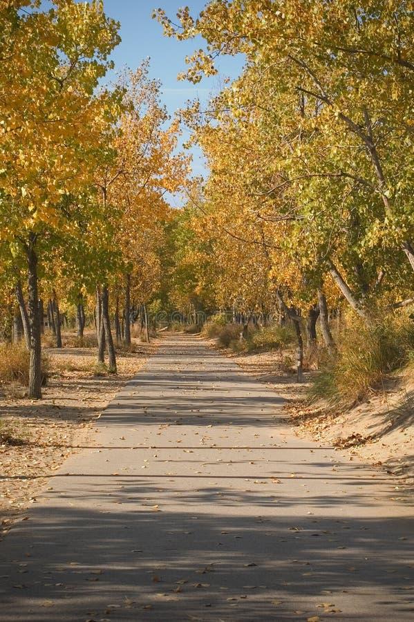 Camino pavimentado en otoño imagen de archivo