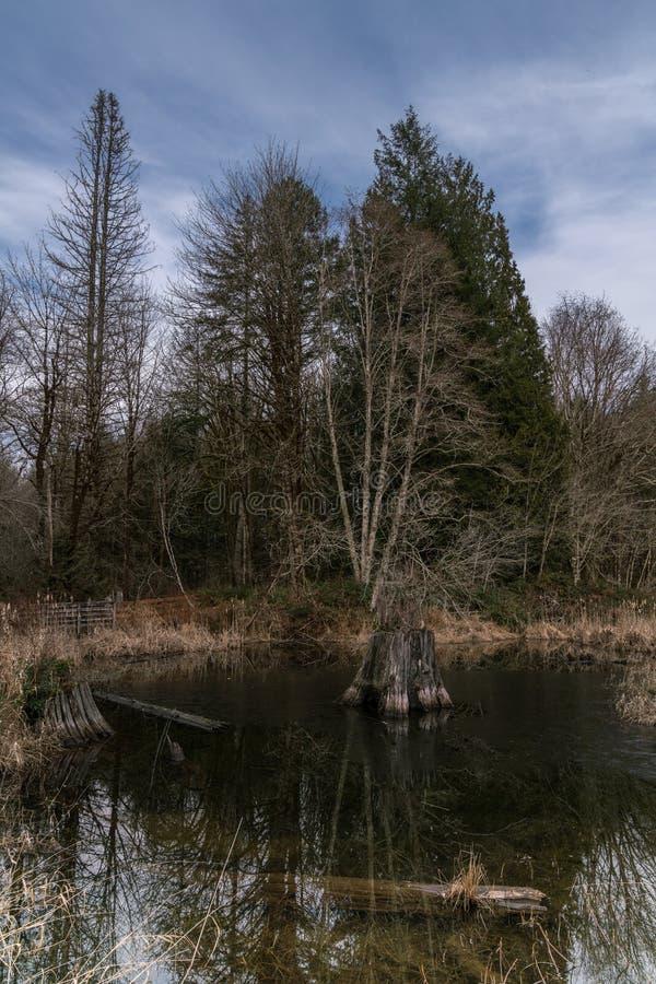 Camino perdido de la charca del castor, río, Woodstock NH 03262 fotografía de archivo libre de regalías