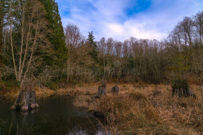Camino perdido de la charca del castor, río, Woodstock NH 03262 imágenes de archivo libres de regalías