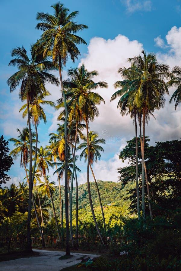 Camino pintoresco entre la plantación con los árboles de coco, La Digue, Seychelles de la vainilla Luz caliente de la puesta del  fotografía de archivo