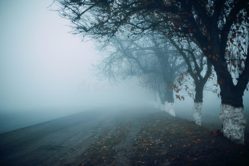 Camino por mañana temprana de niebla del otoño Siluetas del ?rbol Horisontal Espacio para el mensaje fotografía de archivo libre de regalías