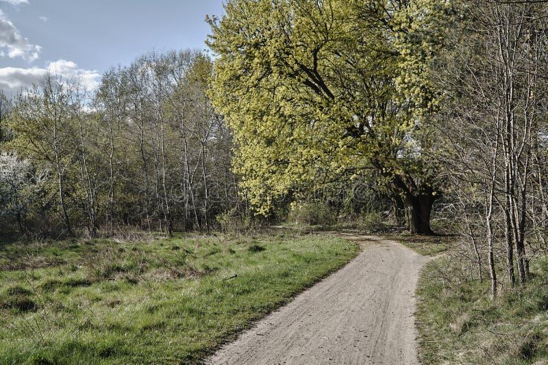 Camino punteado con los árboles con las flores blancas fotografía de archivo