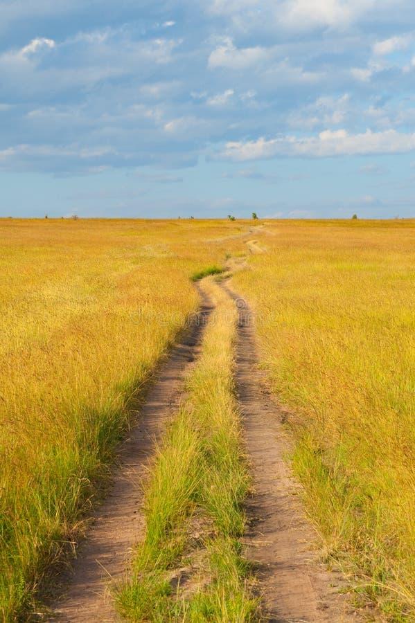 Camino que cruza la sabana fotografía de archivo libre de regalías