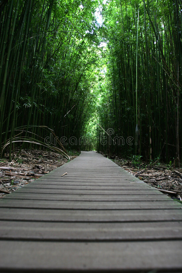 Camino que recorre del zen en bosque fotos de archivo