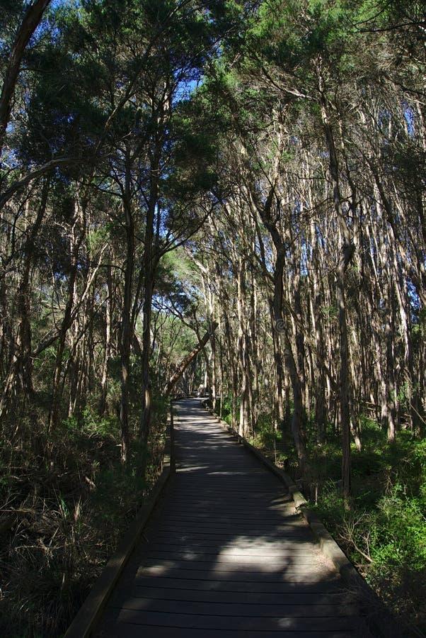 Camino que recorre en bosque imagenes de archivo