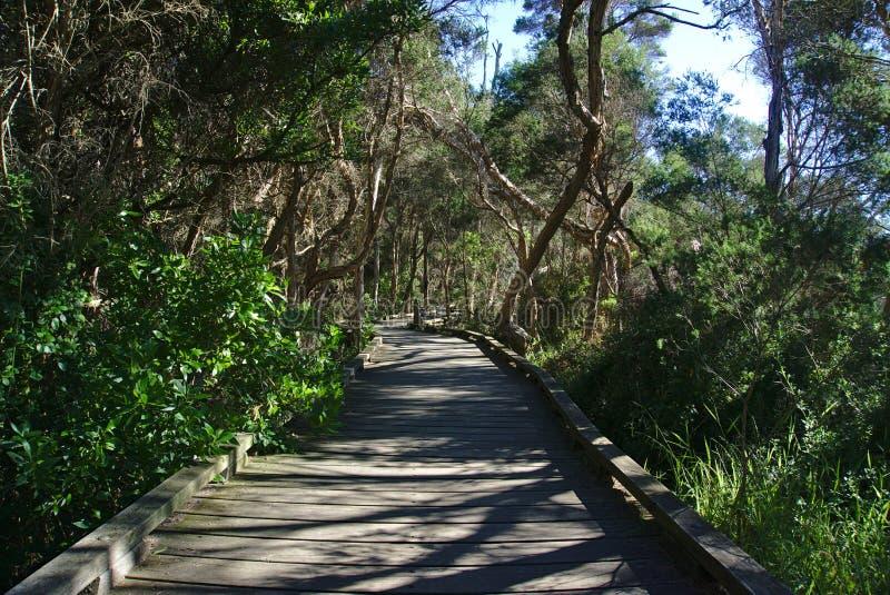 Camino que recorre en bosque fotografía de archivo libre de regalías