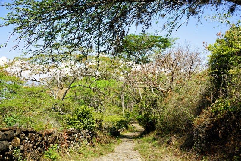 Camino Real Spur in Guane, Kolumbien lizenzfreie stockfotografie