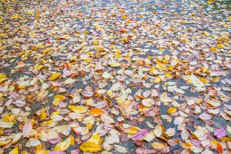 Camino recto abandonado de la montaña en Autumn Day lluvioso Algunas hojas caidas están en el asfalto mojado Colores hermosos de  imagen de archivo