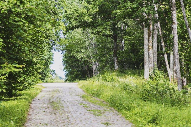 Camino rocoso a través del bosque fotografía de archivo