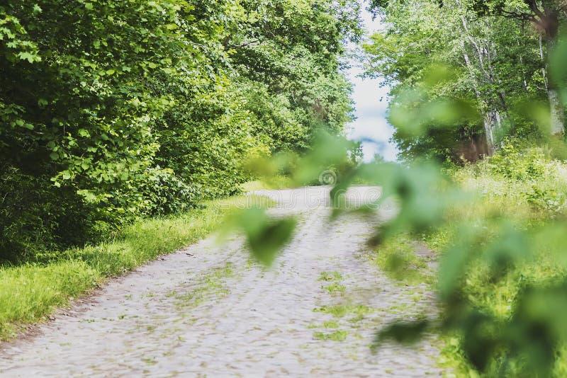 Camino rocoso a través del bosque imagenes de archivo