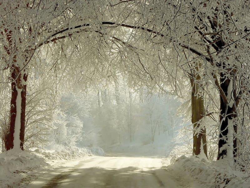 Camino rural del invierno a través de los árboles congelados imagen de archivo