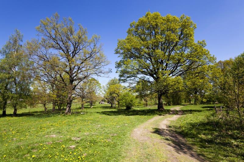 Camino rural, primavera fotografía de archivo libre de regalías