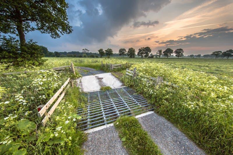 Camino rural a través de los prados adornados con la flor del perejil de vaca foto de archivo