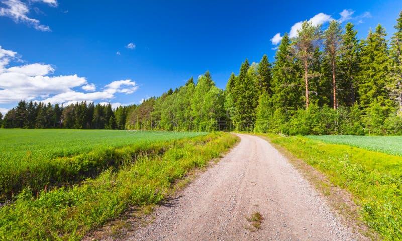 Camino rural vacío cerca del campo verde en verano imágenes de archivo libres de regalías